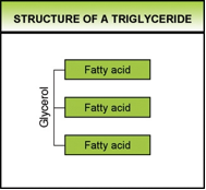 Fig. 1. The molecular structure of a triglyceride